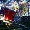 寺と神社の違いは?神社へ行かない方がいい日がある?
